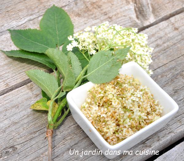 compote fleurs de sureau rhubarbe